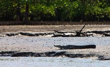 Crocodile Resting On The River Bank Stock Photo