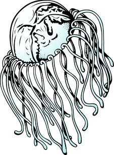 Free Jelly Fish Stock Images - 16954414