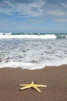 Free Yellow Starfish Stock Image - 16954461