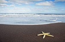 Free Yellow Starfish Stock Photography - 16954942