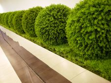 Free Modern Styled Plants Stock Photography - 16956162