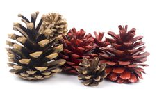 Free Pine Cones Royalty Free Stock Photography - 16956277