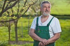Free Senior Man Gardening In His Garden Royalty Free Stock Images - 16959029