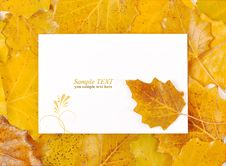 Free White Congratulation Form In The Autumn Foliage Royalty Free Stock Photo - 16959135