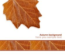 Greeting Card From The Autumn Leaves Stock Images