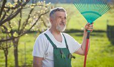 Free Senior Man Gardening In His Garden Stock Image - 16959831