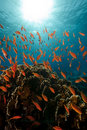 Free Coral And Fish In The Red Sea. Stock Photo - 16961470