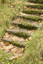 Free Mossy Staircase With Fallen Maple Leaves Stock Photos - 16967573