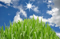 Free Green Grass And Blue Sky Stock Image - 16969991