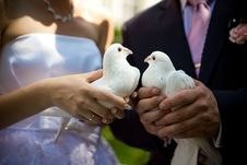 Free White Pigeons Stock Images - 16960184