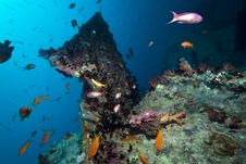 Free Stern Of The Thistlegorm Wreck. Royalty Free Stock Image - 16960246