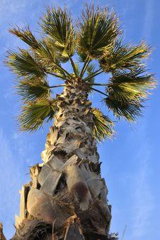 Free Palmtree Royalty Free Stock Photo - 16960505