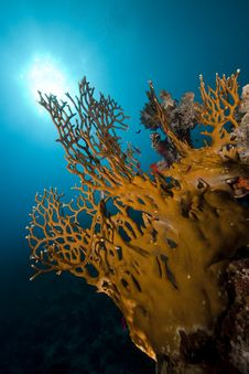 Free Coral And Fish Stock Image - 16961211