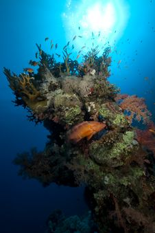 Free Coral And Fish In The Red Sea. Stock Photos - 16961333