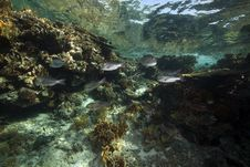 Coral And Fish In The Red Sea. Royalty Free Stock Photos