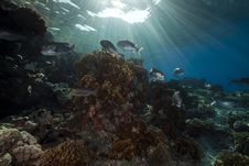 Coral And Fish In The Red Sea. Stock Image