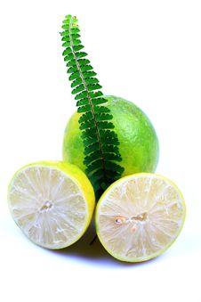 Free Fresh Lemon And Lime Royalty Free Stock Photos - 16963798