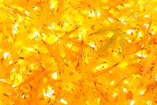 Free Leaves Royalty Free Stock Photos - 16964428