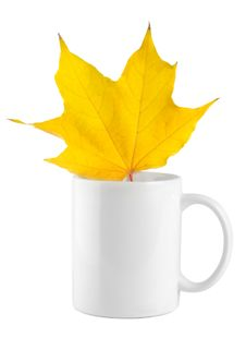 Yellow Maple Leaf In The Cup Stock Photography