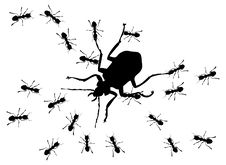 Free Hunting Of Ants Stock Images - 16965934