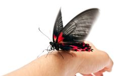 Free Butterfly On Man S Hand Stock Images - 16967454