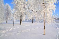 Free Tree In Snow Stock Photos - 16967613