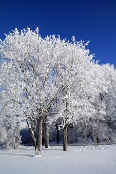 Free Tree In Snow Royalty Free Stock Image - 16967676