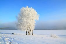 Free Tree In Snow Royalty Free Stock Photos - 16968278