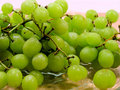 Free Green Grapes Royalty Free Stock Image - 16977336