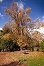 Free Autumn Big Tree In Gardens Stock Photo - 16978180