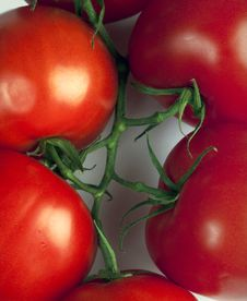 Free Tomatoes Stock Image - 16970491