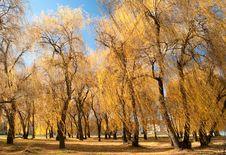 Free Tree Royalty Free Stock Photo - 16970975