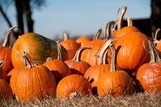 Free Stack Of Orange Pumpkins Royalty Free Stock Photos - 16971118