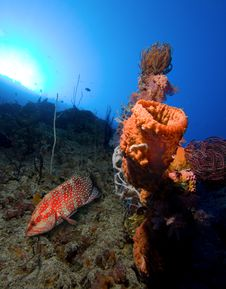 Free Underwater Life Royalty Free Stock Photos - 16971588