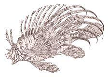 Free Fish Zebra Pterois Volitans Royalty Free Stock Images - 16971649