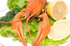 Free Crayfish Stock Image - 16971911