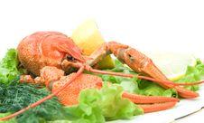 Free Crayfish Stock Images - 16971924