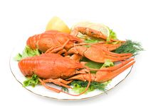 Free Crayfish Stock Photo - 16971960