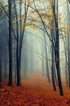 Free Autumn Landscape Royalty Free Stock Photos - 16972058