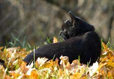 Free Black Cat Stock Image - 16973161