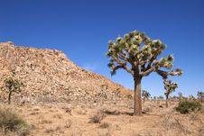 Free Joshua Tree National Park Stock Images - 16973714
