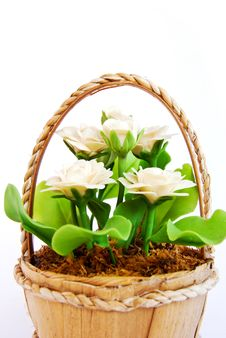 Free White Flower In Basket On White Background Stock Image - 16974431