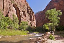 Free Zion NP Riverside Walk Royalty Free Stock Photo - 16974615
