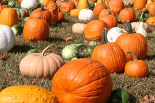 Free Pumpkins In The Field Stock Image - 16977121