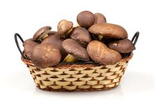 Free Basket Of Mushrooms On  White Royalty Free Stock Photos - 16978028