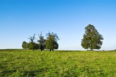 Free Five Trees Royalty Free Stock Photography - 16978117