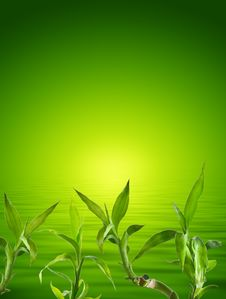 Free Bamboo Background Stock Photos - 16978383