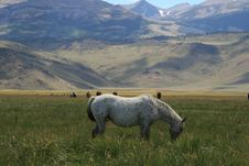 Free Horse Grazing In The Meadow Stock Photo - 16978430