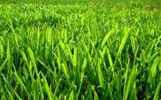 Free Field Grass Royalty Free Stock Photo - 16978715
