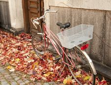 Free Bicycle Royalty Free Stock Photos - 16978948